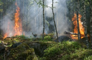 forest-fire-432870_640