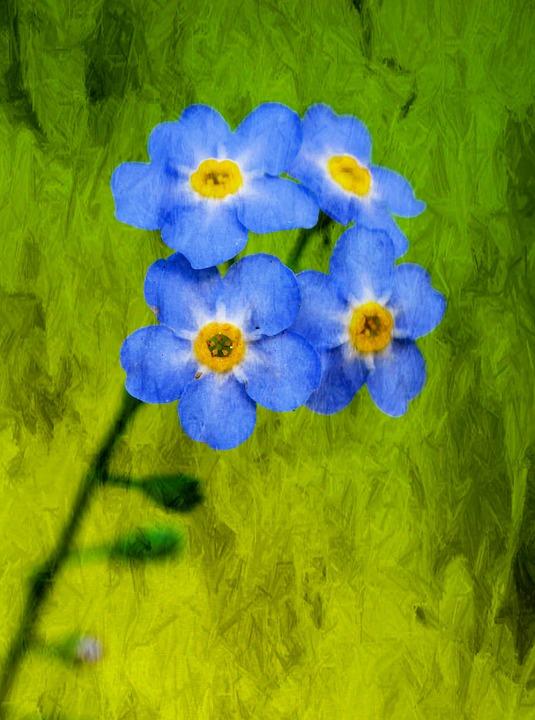 flower-854377_960_720
